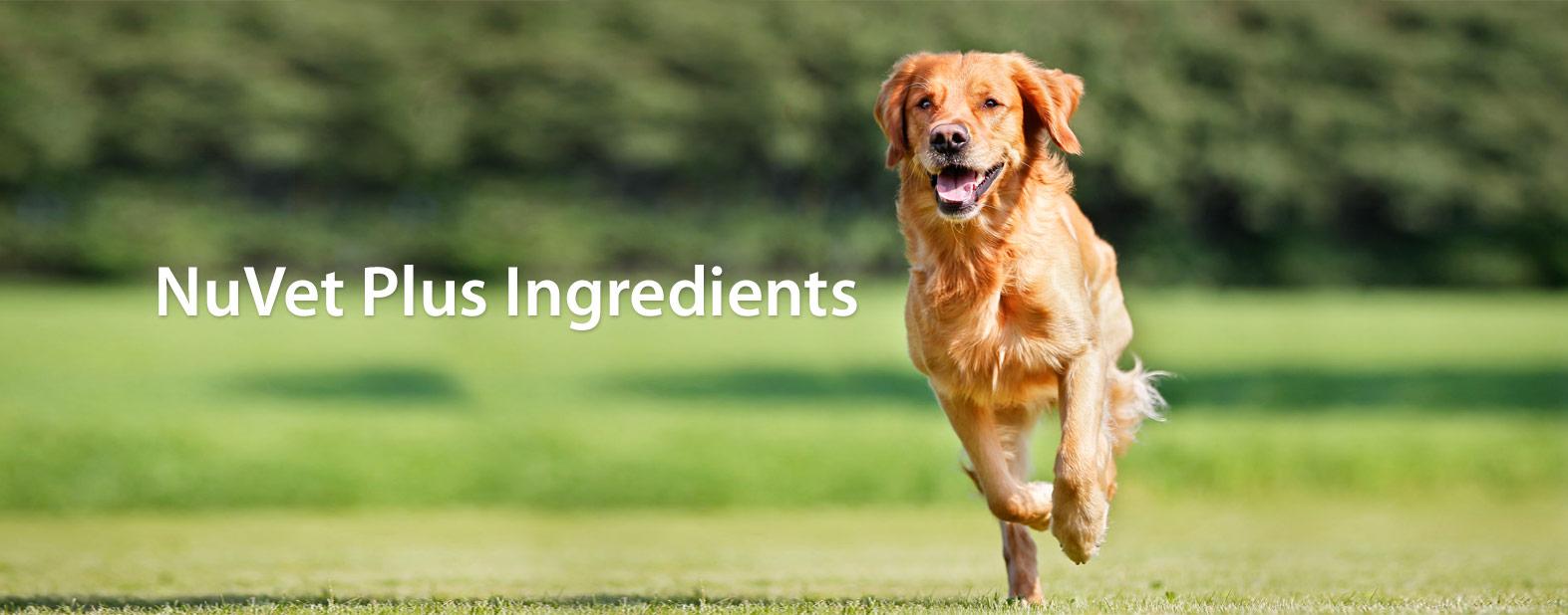 NuVet-Plus-Ingredients